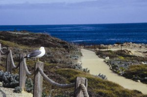 asilomar_conference_grounds_beach_pacific_grove_california_unitedstates